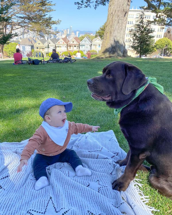 baby aden with chocolate lab in san francisco park